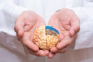 Doktor uz pomoć ruku drži model mozga